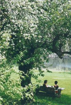 womenunderappletree